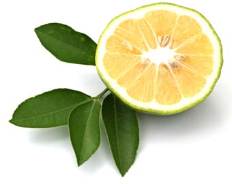 bergamotti calabresi usati per fare il liquore al bergamotto