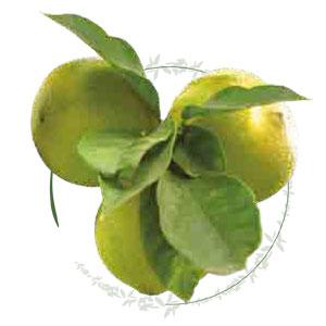 come viene prodotto il liquore Crema di bergamotto