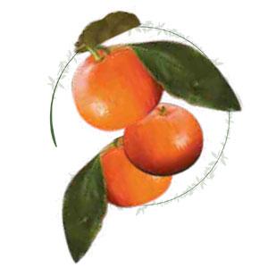 come viene prodotto il liquore Liquore di clementine